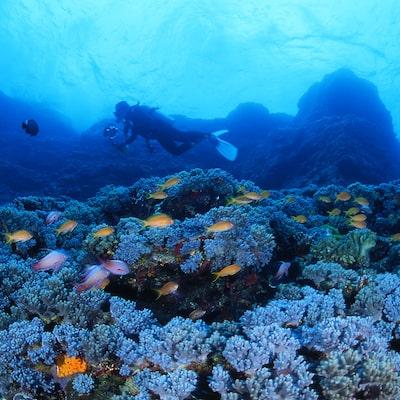 沖縄体験ダイビング付きツアー特集イメージ
