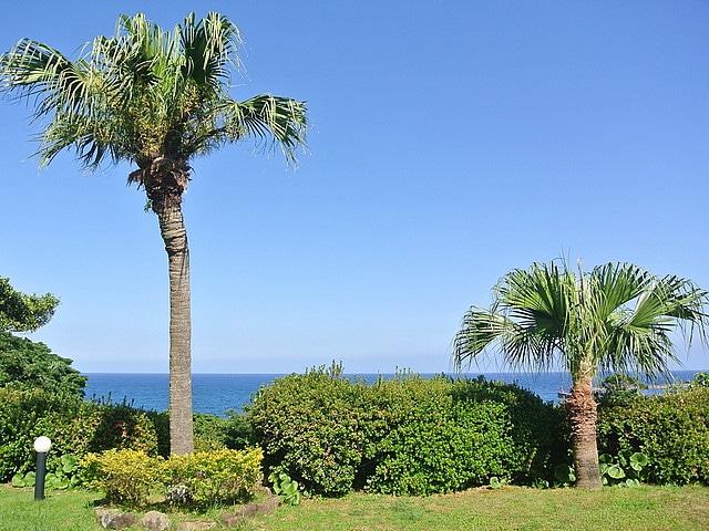 屋久島グリーンホテル 眺望