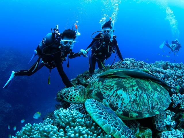 石垣島で体験ダイビング!イメージ