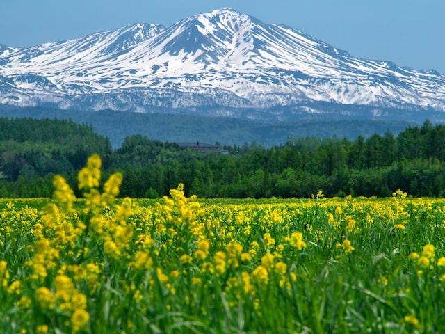 5月ファイナルバーゲン♪ガソリン満タン返し不要!北海道周遊プランイメージ