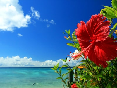 「沖縄 フリー」の画像検索結果