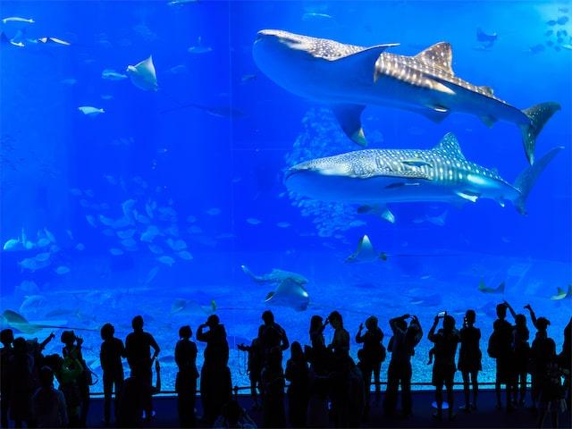 沖縄美ら海水族館入館券付!ホテルチョイスプランイメージ