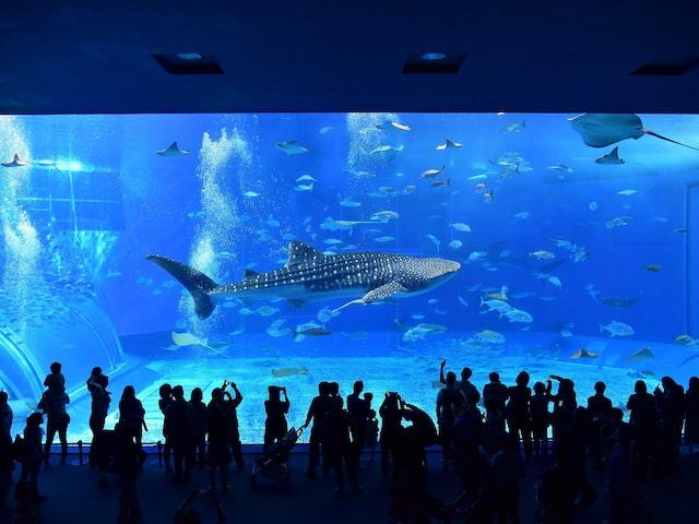 青の洞窟シュノーケル&沖縄美ら海水族館付プランイメージ