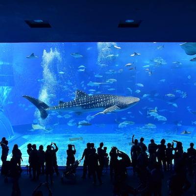 沖縄美ら海水族館入館券付きツアーイメージ