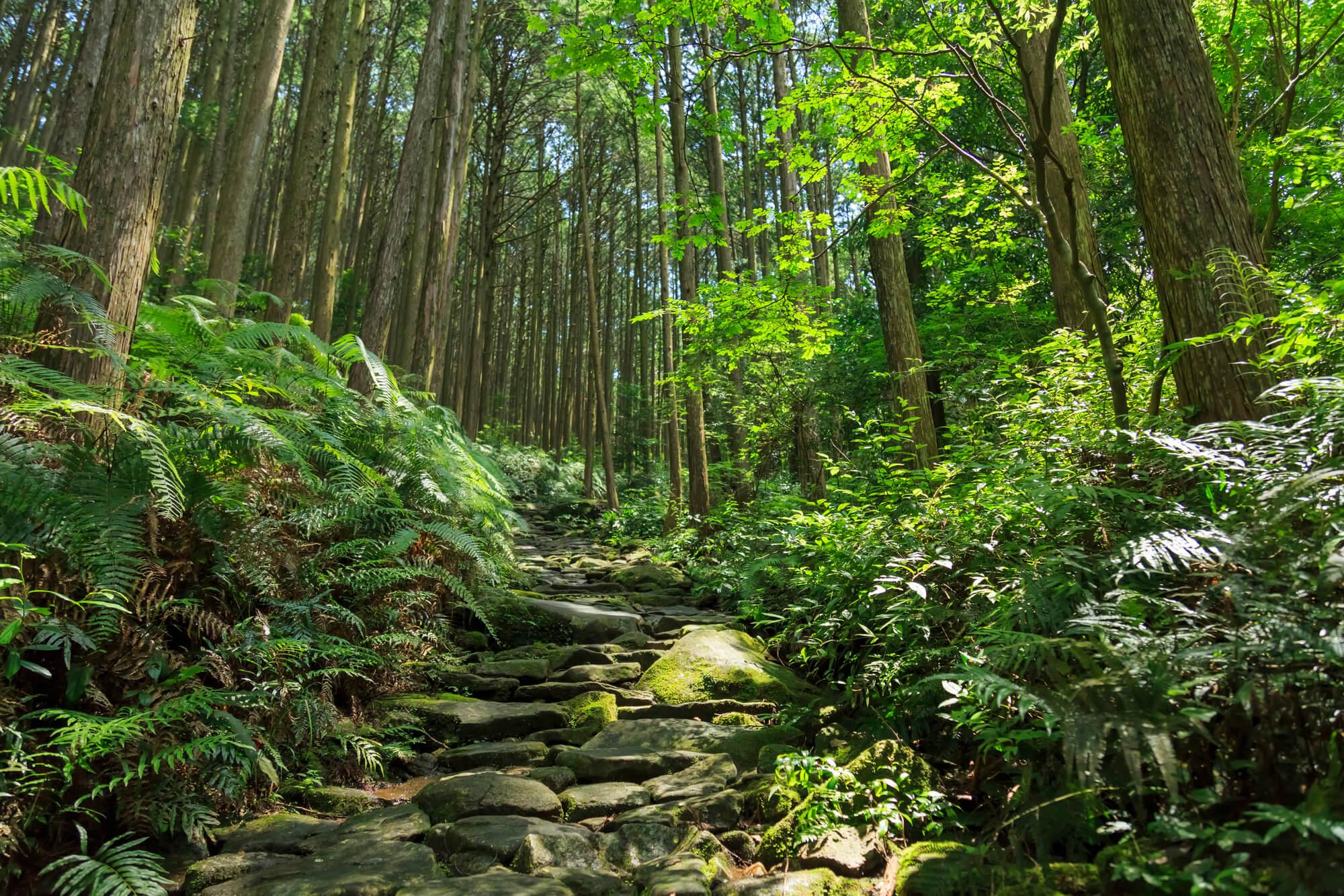 熊野古道伊勢路